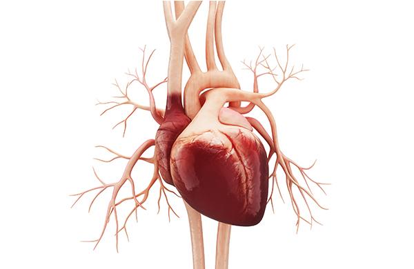 Artéria coronária